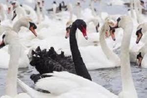 Model Risk_1_black swan