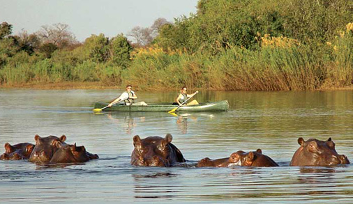 Harnessing2_canoeing-past-the-hippos